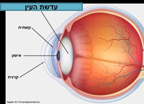 (Hebrew) סוגי לקויות ראייה מרכזיות והשלכותיהן על הראייה